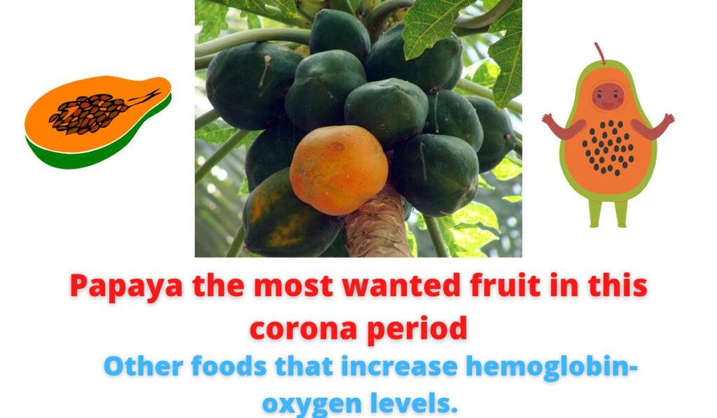 Benefits of eating Papaya.Papaya the most wanted fruit in this corona period   Other foods that increase hemoglobin-oxygen levels.