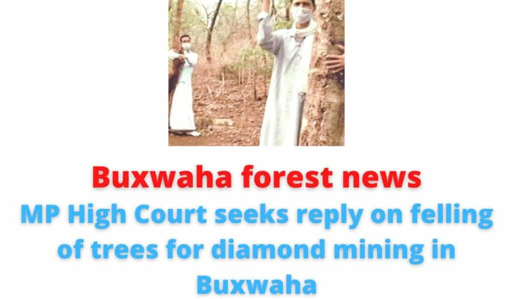 Buxwaha forest news: MP High Court seeks reply on felling of trees for diamond mining in Buxwaha.