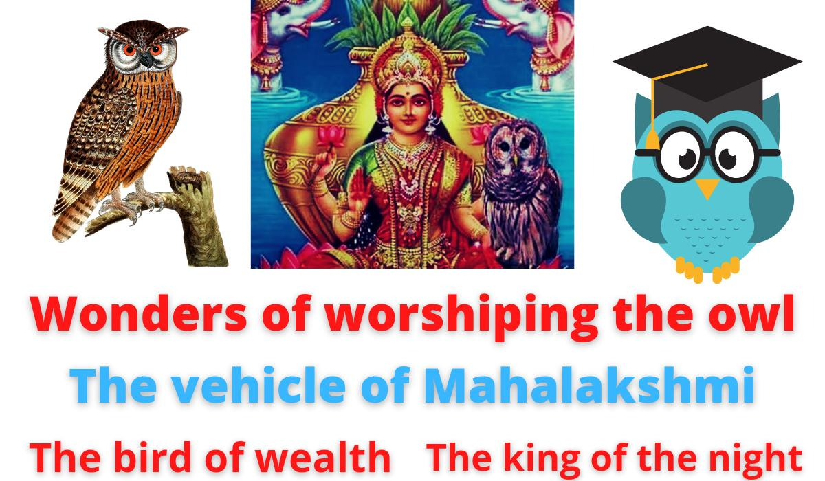 Wonders of worshiping the owl   The vehicle of Mahalakshmi   The bird of wealth   The king of the night.