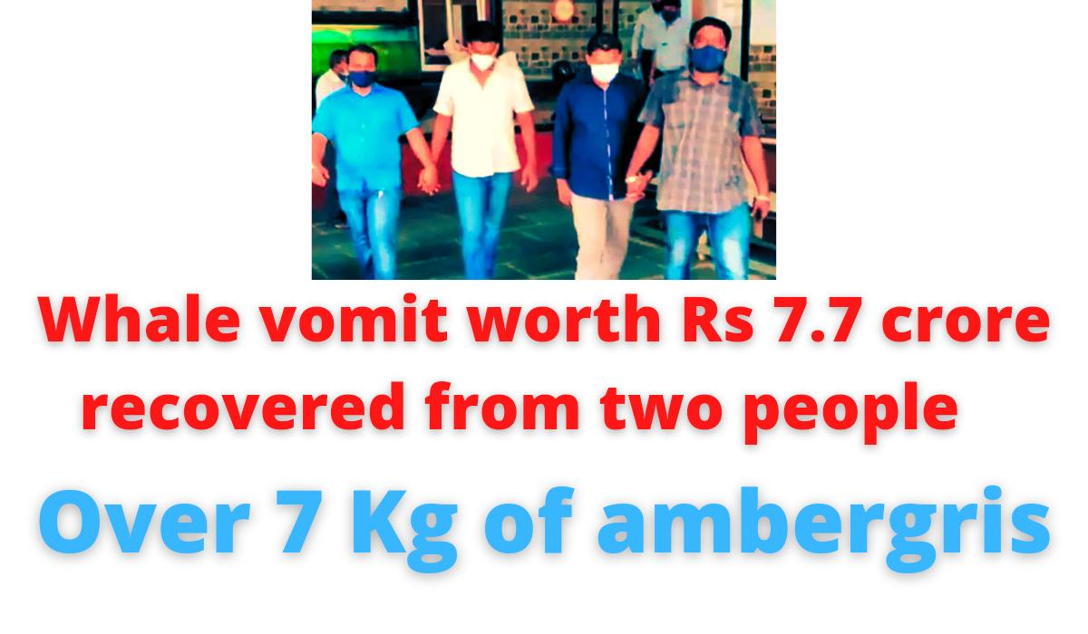 Whale vomit worth Rs 7.7 crore recovered from two people   Over 7 Kg of ambergris.