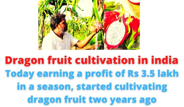 Dragon fruit cultivation in india | Today earning a profit of Rs 3.5 lakh in a season, started cultivating dragon fruit two years ago.