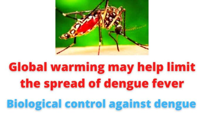 Global warming may help limit the spread of dengue fever   Biological control against dengue.