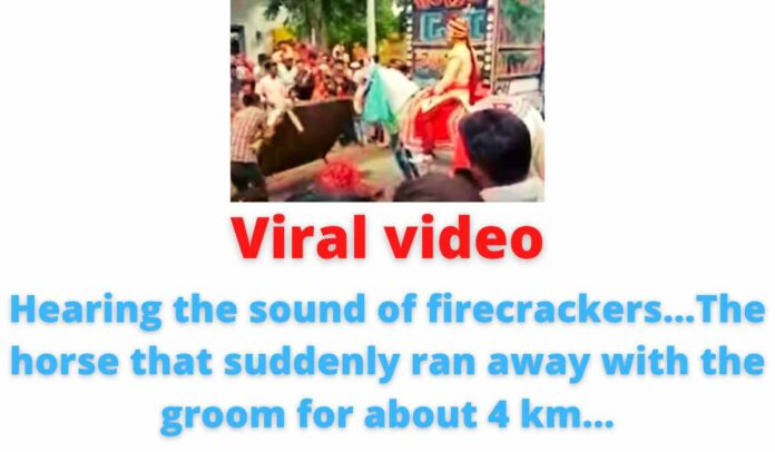 Viral video: Hearing the sound of firecrackers...The horse that suddenly ran away with the groom for about 4 km...