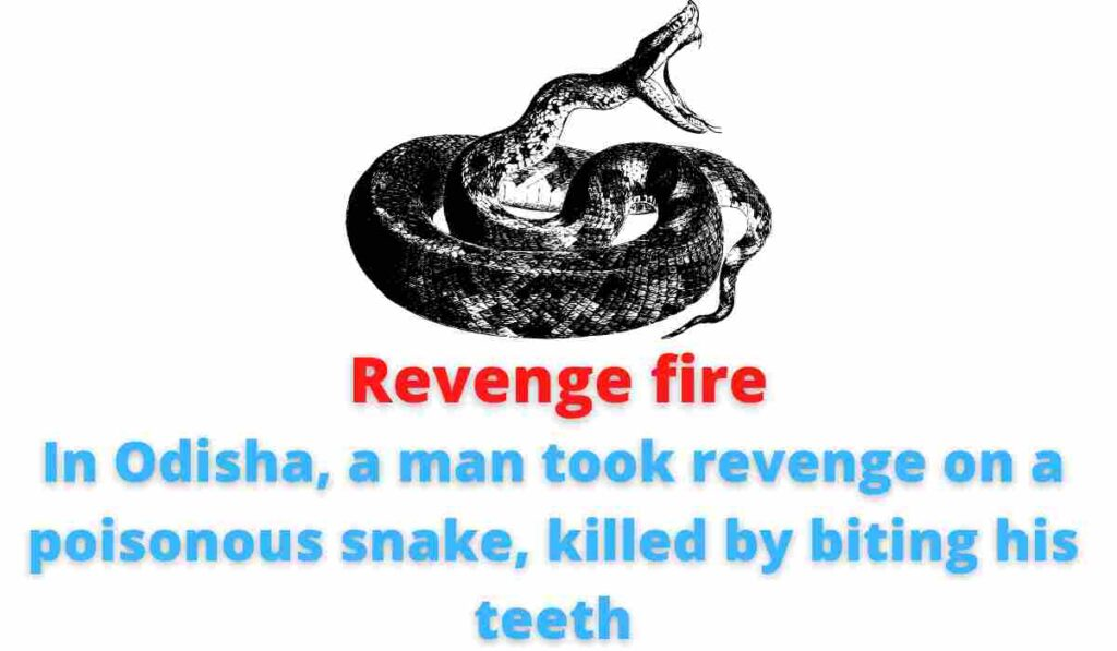 Revenge fire: In Odisha, a man took revenge on a poisonous snake, killed by biting his teeth.