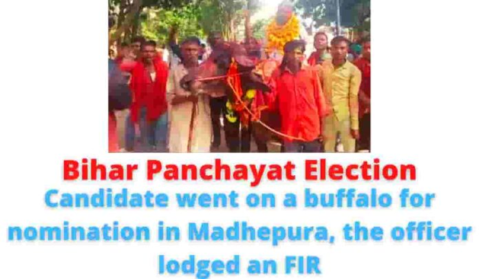 Bihar Panchayat Election: Candidate went on a buffalo for nomination in Madhepura, the officer lodged an FIR.